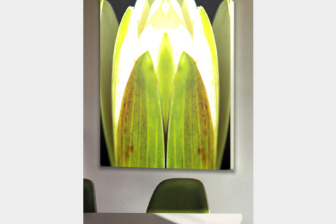 Motiv: Lolling Waterlilies